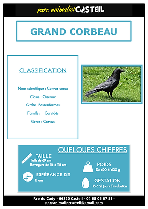 grand corbeau_Page_1.png