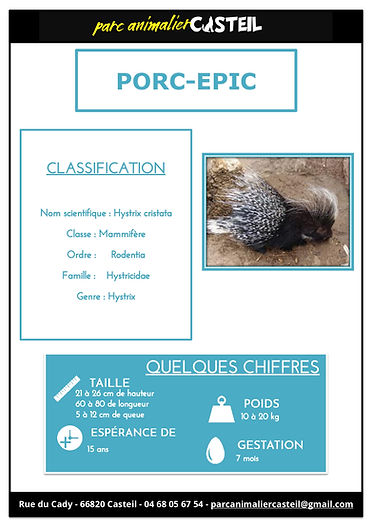 porc epic1.jpg