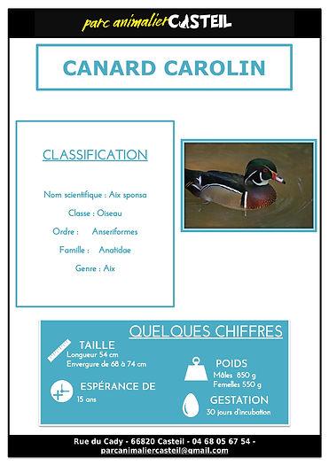 canard carolin1.jpg