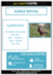 aigle royal_Page_1.png