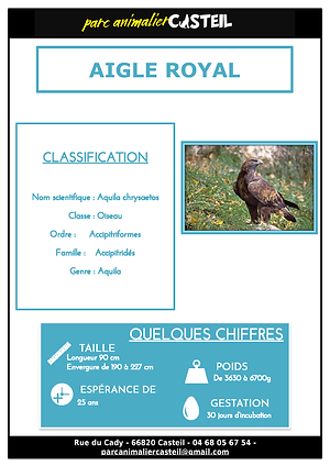 aigle royal_Page_1.png