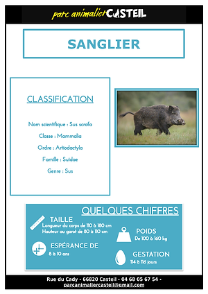 sanglier_Page_1.png