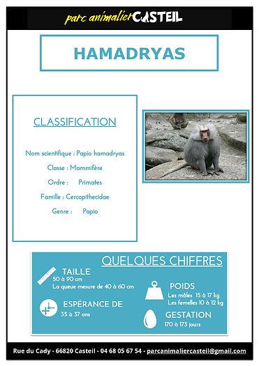 hamadryas1.jpg
