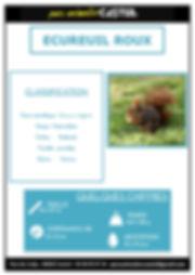 ecureuil roux1.jpg