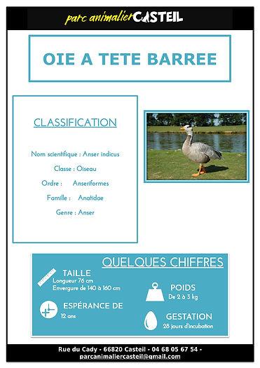 oie_tete_barrée1.jpg