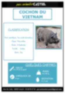 cochon vietnam1.jpg
