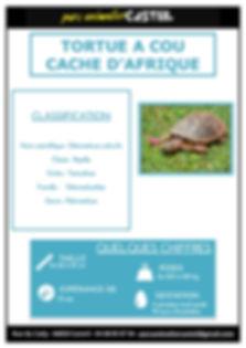 tortue_cou_caché1.jpg