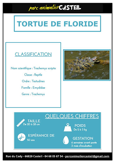 tortue floride1.jpg