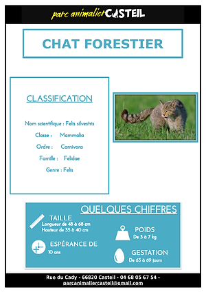 chat forestier_Page_1.png