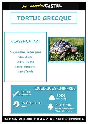 tortue grecque1.jpg