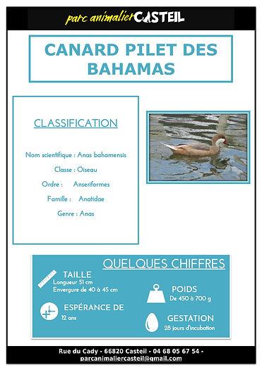 canard pilet des bahamas1.jpg