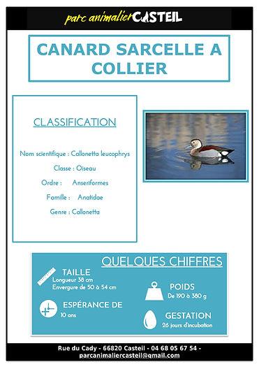 canard sarcelle collier1.jpg