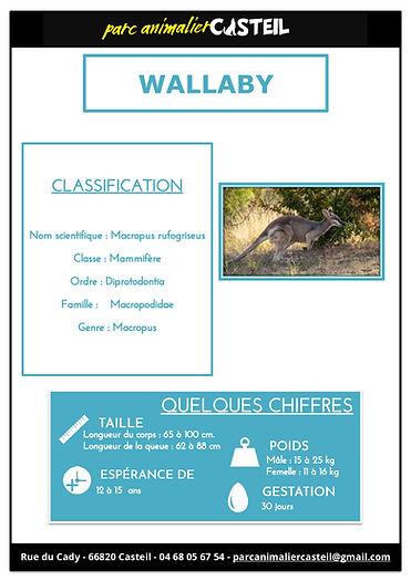 wallaby1.jpg