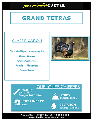 grand tétras_Page_1.png