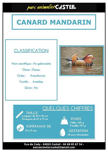 canard mandarin1.jpg