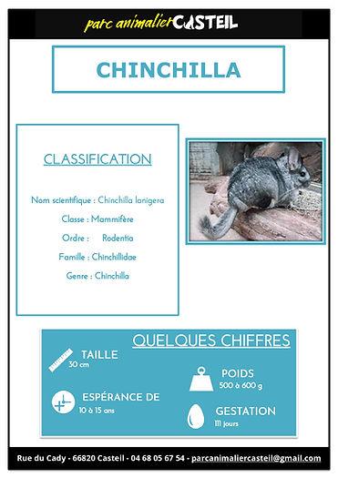 chinchilla1.jpg