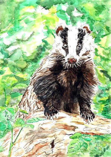 Badger Signed Print