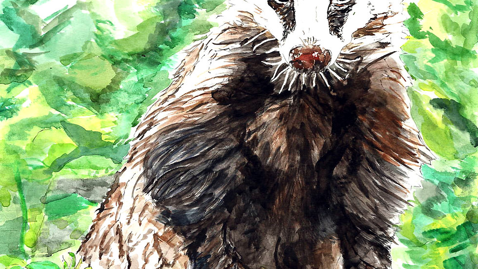 Badger Watercolour Painting