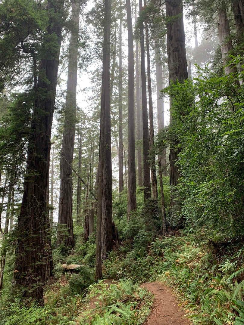 Jedediah Smith Redwoods National Park_ed