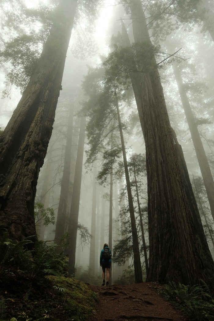 Redwoods National Park overland trip