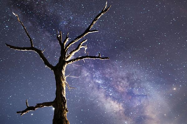 Dead tree-final.jpg