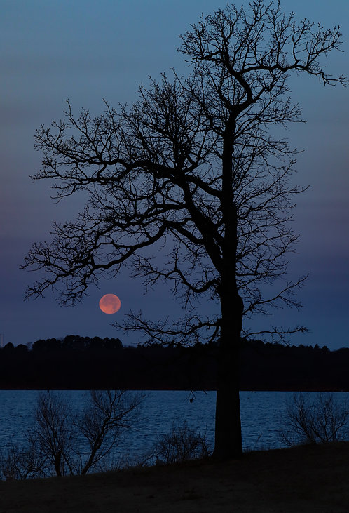 A Tree and Full Moon