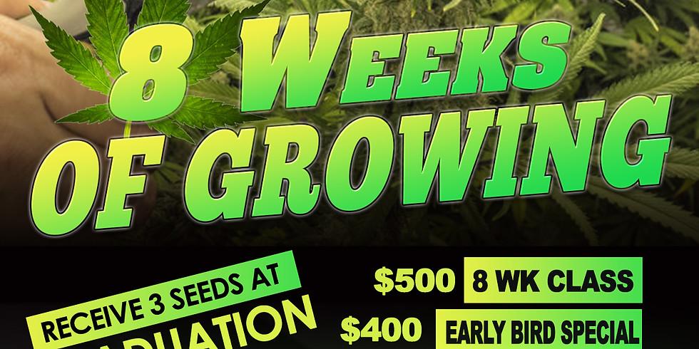 8 Weeks Of Growing