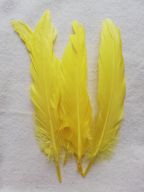 A Pack Of Yellow Goose Feathers