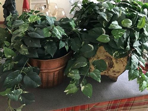 Plants (faux)