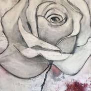 weisse rose 80x100