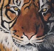 tiger im schatten.jpg