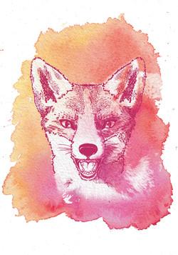 fox_white