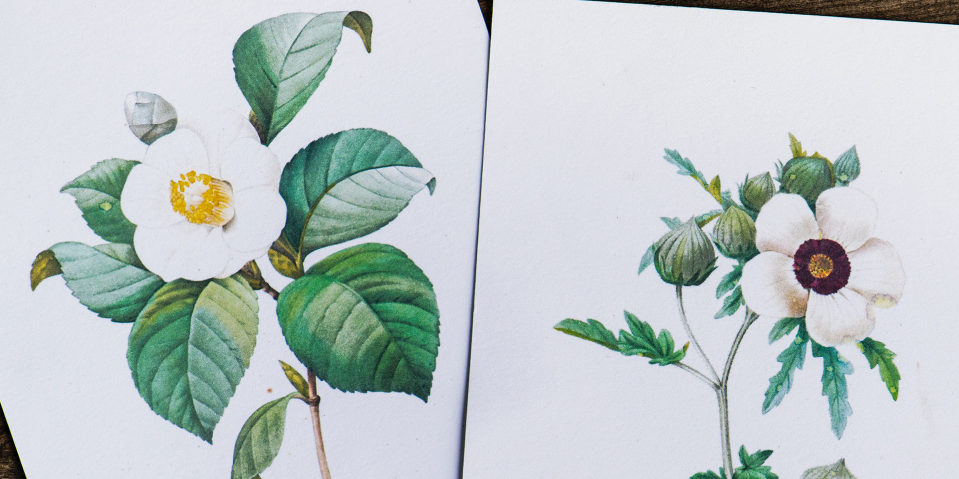 Illustrations fleurs