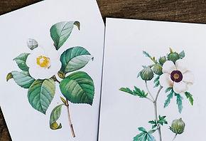 Illustrations fleurs de Bach