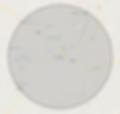 bozeman radius cropped_edited.png