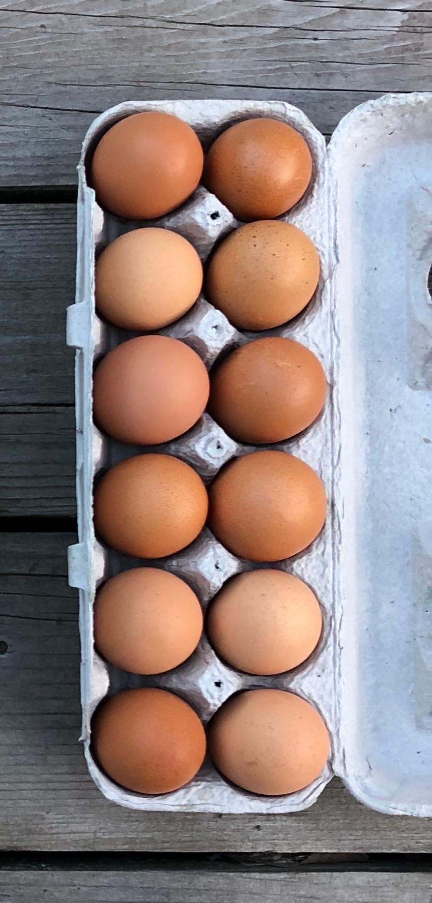 12 brown farm eggs in light grey egg carton, dark grey wood backgroun