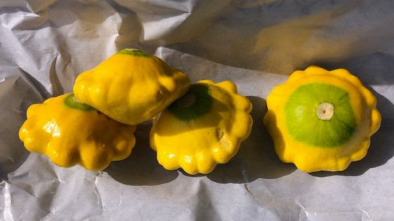 yellow and green disc-shaped squash