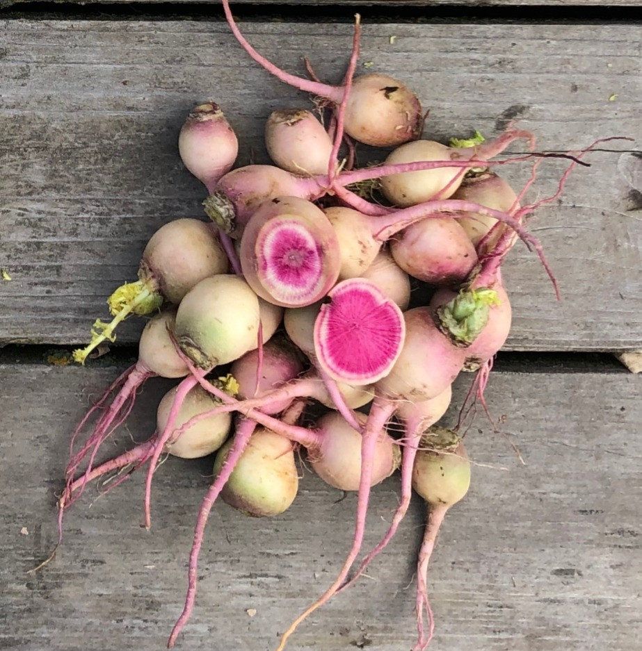 white, green, and pink radishes on a grey wooden background