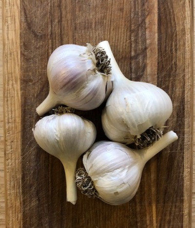 white and purple garlic heads on a wooden background