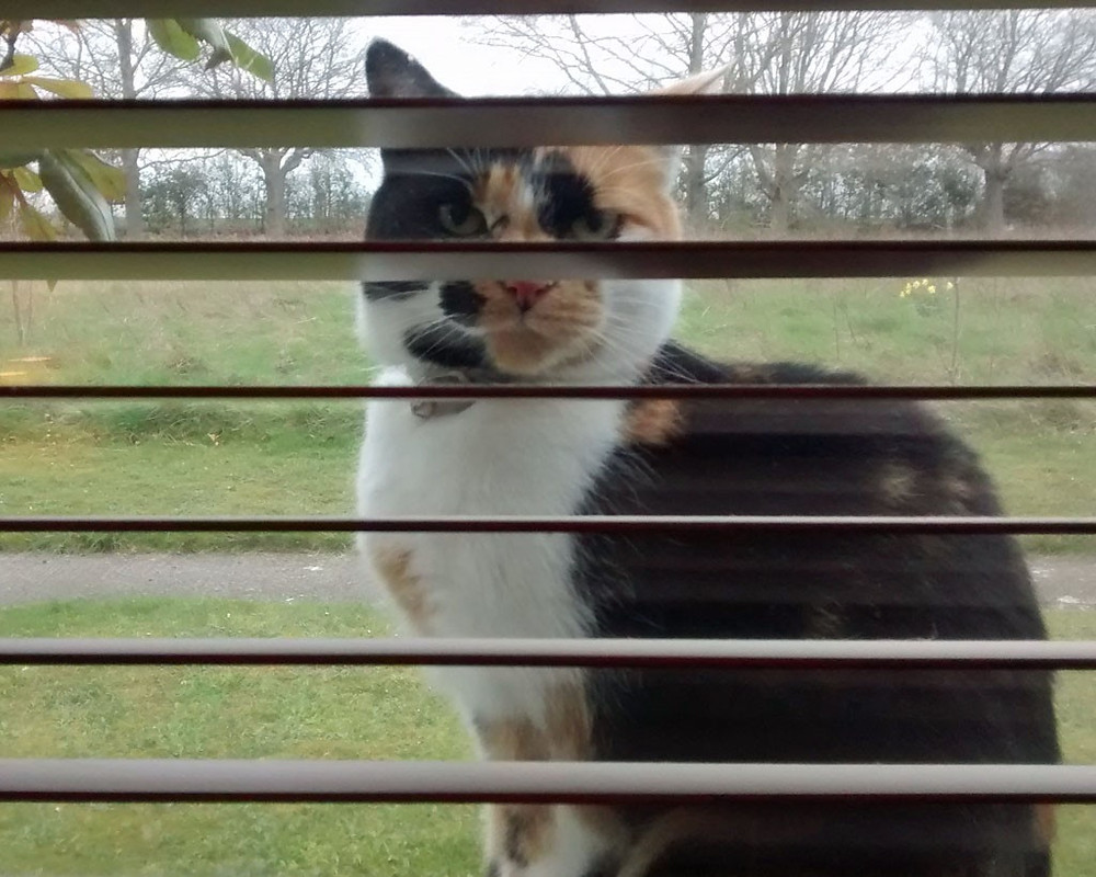 Dink at the window