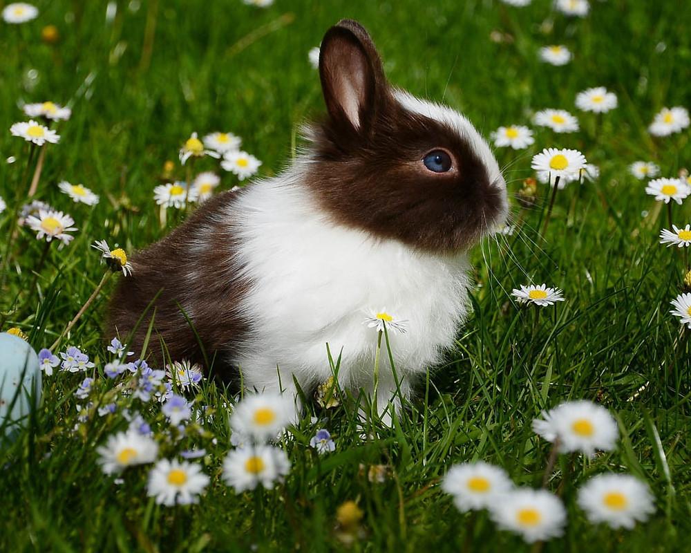 awww its a bunny