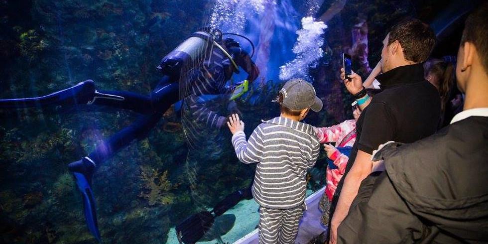 Погружения в океанариуме в Крокус-Сити