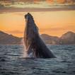 Whale_Watching_8e60c2b1-c9f0-4c8e-a436-3