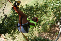 Tree Climbing at Panola Mountain