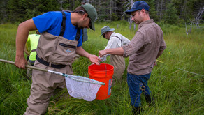 Linking landscape genetics and fisheries