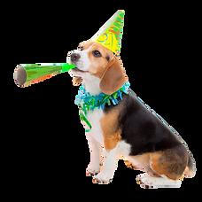 Dog%202%20TB_edited.png