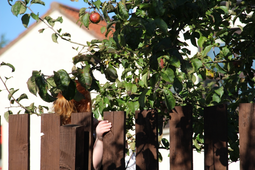 Girl hiding under apple tree