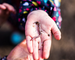 Child holding a worm at nature kindergarten