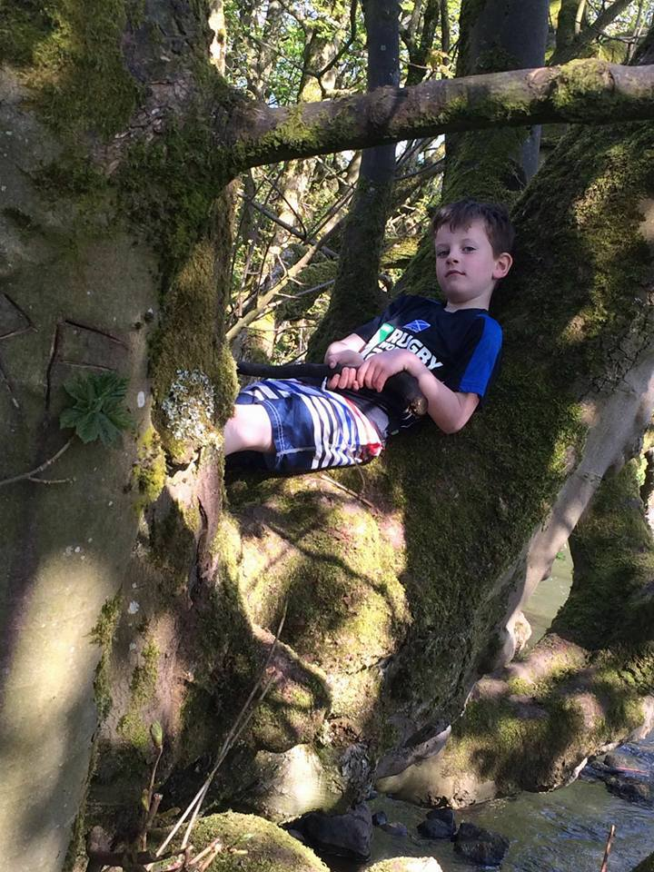 Tree climbing and relaxing in nature