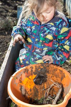 Child weeding the nature kindergarten allotment